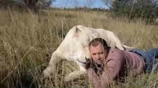 ЭТО  ЧТО-ТО ! Мужчина и белая львица Герда !