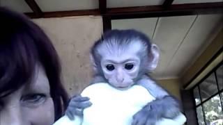 Sarah and some Vervet Monkey Orphans