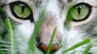 Самые красивые коты интернета