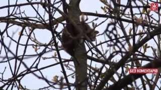 Кота, який 4 дні просидів на дереві, врятували працівники ДСНС - Житомир.info