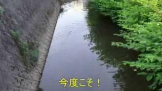ナマズ釣り thumbnail