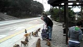Old Man Hits Monkey in the Head!!