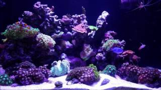 jbj 45 gallon rimless reef back from vacation