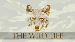 THE WILD LIFE OFFICIAL CHANNEL TRAILER