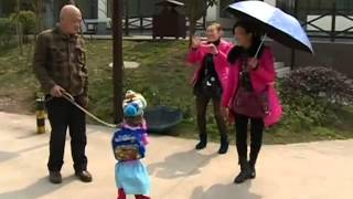 China: Dog walks on hind legs dressed as a schoolgirl