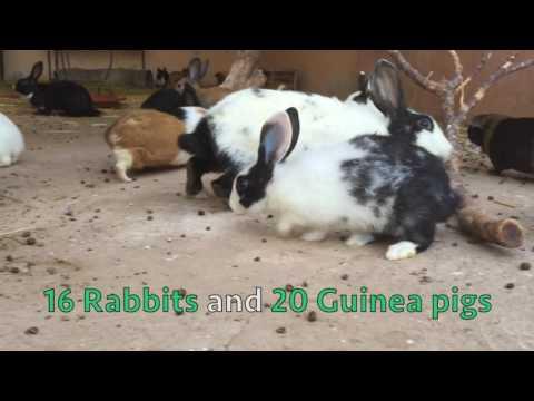 Morocco Stray animals