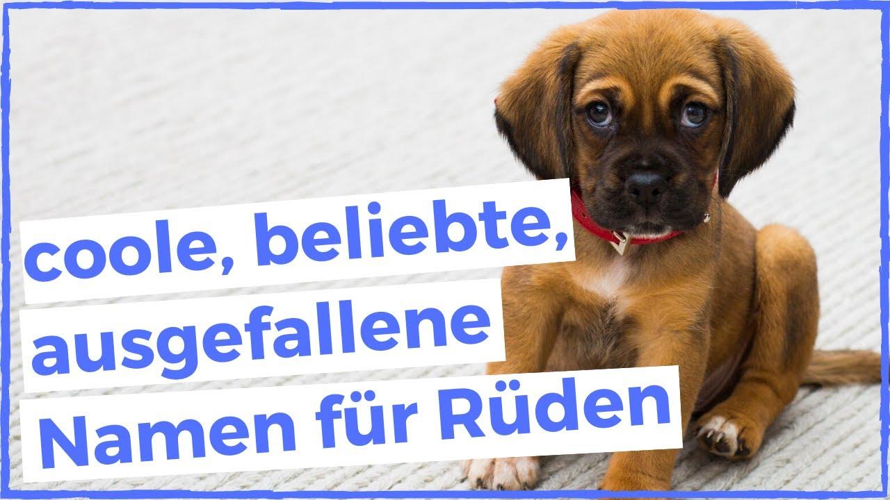 Beliebte Hundenamen Für Rüden