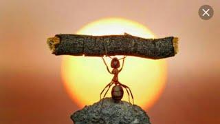 הרב רונן שאולוב - מ-ח-ז-ק ! ! ! - מה אפשר ללמוד מהנמלה ?  מי נקרא אדם נקי וצדיק ?