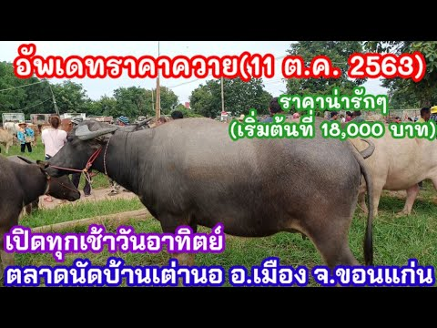 อัพเดทราคาควายตลาดนัดบ้านเต่านอ อ.เมือง จ.ขอนแก่น(11 ตุลาคม 2563)ควายน่าเลี้ยงราคาถูกๆ