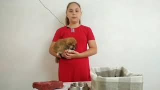 Первый прикорм щенка.