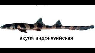 Російська Рибалка 3 Полінезія! Акула Індонезійська!