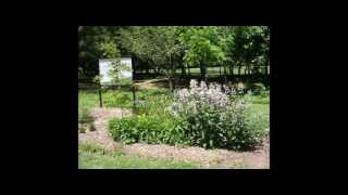 How To Build A Rain Garden To Protect Water Quality