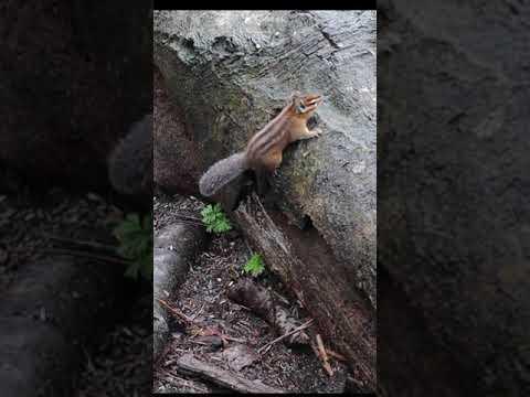 Squirrels | Captured in | BC Canada