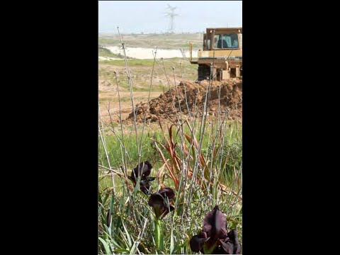 Is Tree Planting Good Or Bad For Israel's Nature? Presented By Alon Rothschild