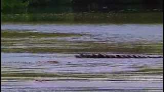 Nature-The Reptiles, Part1of4 - Alligators and Crocodiles