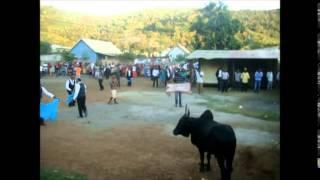 Tam-tam bœuf Matafoussa Avril 2014