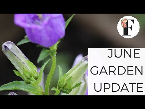 June Garden Tour Update: Cut Flower Farm + Vegetable Garden Gardening for Beginners Growing Flowers - 동영상