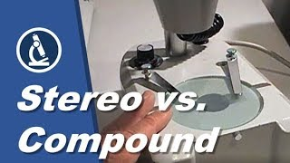 Stereo vs compound microscopes