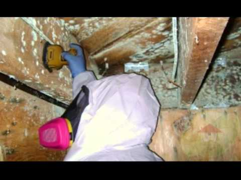 how to test for black mold santa ana ca youtube. Black Bedroom Furniture Sets. Home Design Ideas