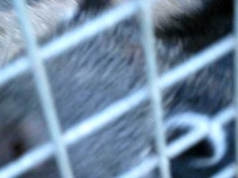 The Binturong, Asian Bearcat, the Palawan Bearcat, or simply the Bearcat.