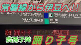 【185系】EX・わずか数年で廃止に… 常磐線から伊豆へ! 我孫子発踊り子号に乗ってきた!!