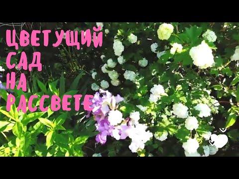 САД в начале ИЮНЯ. Какие многолетники цветут в начале лета