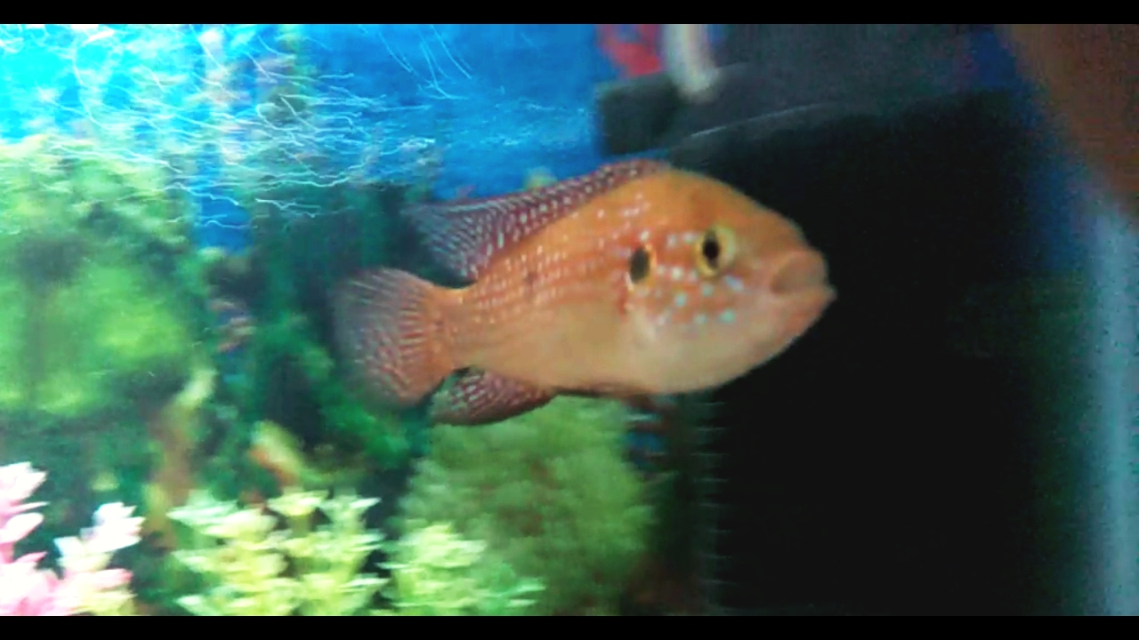 Fish aquarium white spots - 3 Easy Tips To Cure Fish From White Spots Ick Or Ich In Hindi