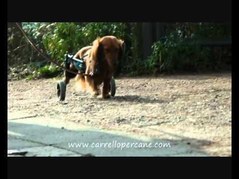 Carrello Per Cane Sedia A Rotelle Per Teckel Youtube