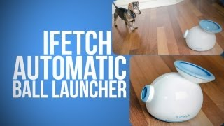Your Dog Will Never Be Bored Again With Ifetch