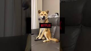 리모콘 장악한 강아지 둥이 | 주말에 넷플릭스는 못참지…