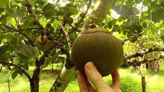 Jungle Survival Food | Chupa Chupa Fruit