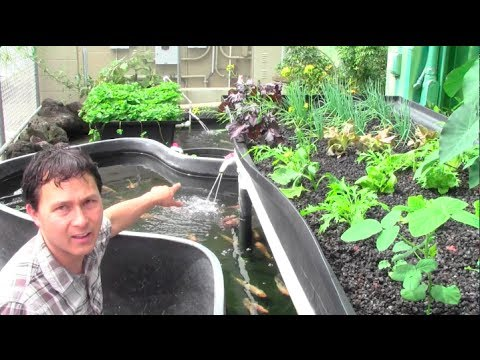 What is Aquaponics? How it Works & Why an Aquaponic Setup Ca