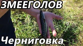 Змееголов Черниговка(Поехали на отдых и кто-то заметил рыбок в озере)))Я поехал назад домой за удочками))), 2016-08-30T08:21:59.000Z)