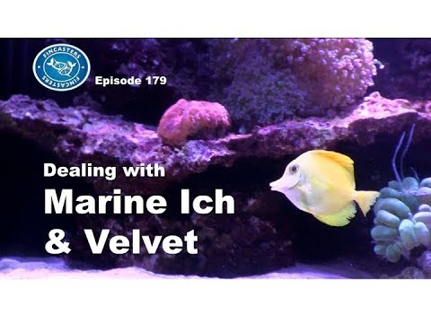 Marine Ich And Velvet Fincasters Episode 179