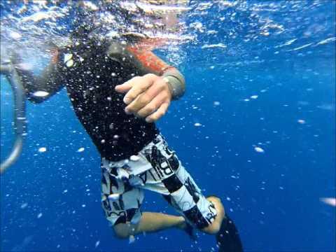 swimming with mating humpbacks in Vava'u Tonga