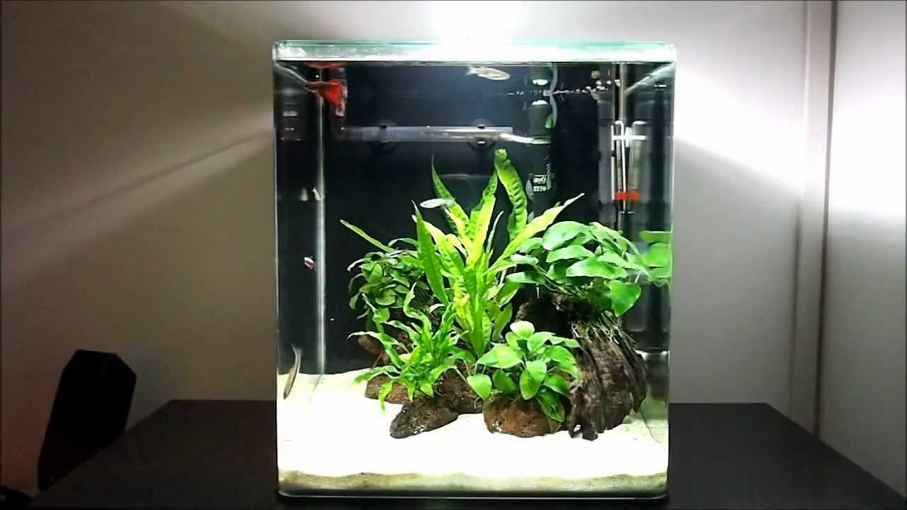 Java Fern And Anubias Freshwater Nano Cube Aquarium Day