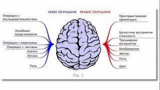 Как запустить мозги(Нас с детства учат думать логически. Вся система образования: школы, Вузы, развивают в основном лишь левое..., 2012-07-12T13:11:55.000Z)