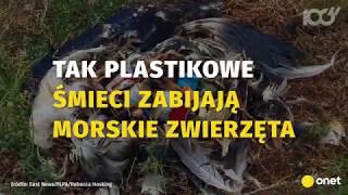 Tak plastik zabija zwierzęta! | Onet100