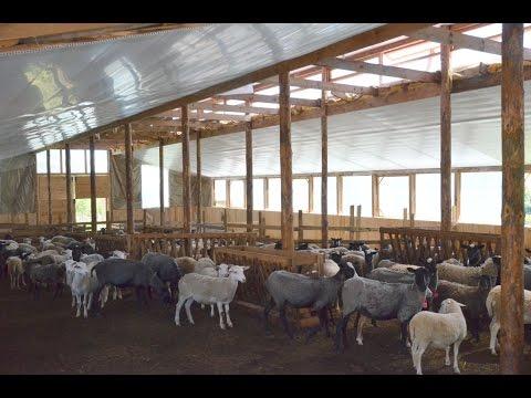 видео: Условия содержания овец. Фермерское хозяйство