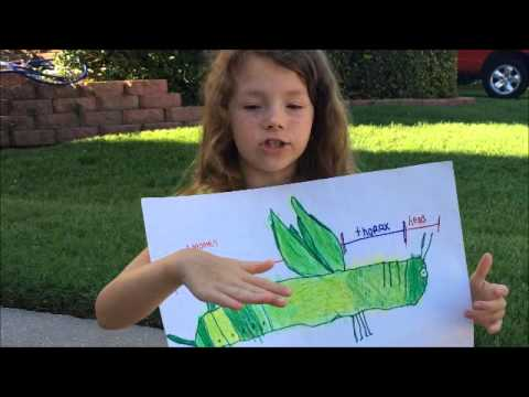 Facts about Grasshoppers - YouTube