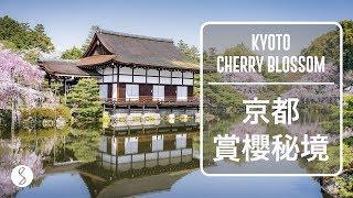 Spice 日本 | 京都人少的賞櫻秘境,看完就能規劃好的 5 條路線攻略:日本旅遊 櫻花 關西 thumbnail