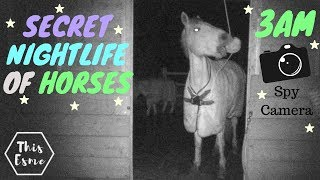 secret-nightlife-of-horses-3am-spy-camera-this-esme