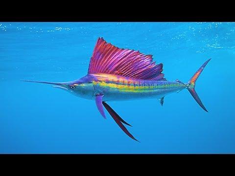 Image of: Habitat Top Fastest Animals In The Ocean Youtube Top Fastest Animals In The Ocean Youtube