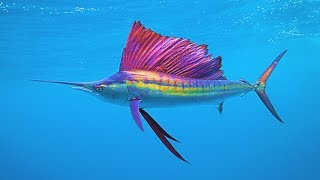 Top 5 Fastest Animals In The Ocean