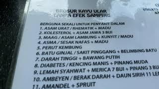 Download Mp3 Kayu Ular Papua Berkhasiat Sembuhkan Banyak Sakit