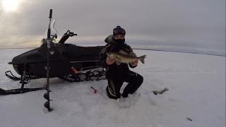 Ловля судака зимой на рыбинском водохранилище