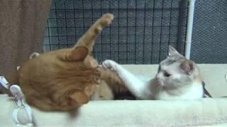 左・9才の長男猫マリン(体重10kg)と右・6才の次女猫ナナ(体重3.2kg...