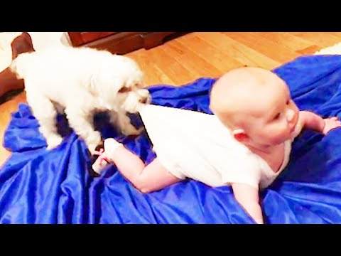 Adorable Babies Playing With Dogs #3 ★ Dogs Babysitting Babies