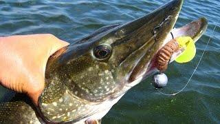 Graphiteleader Rivolta 812H: тяжелая летняя рыбалка и щука 4 кг(Очередной летний выезд на воду оказался довольно трудовым. Всего три рыбы на крючке. Rivolta как всегда не..., 2015-08-10T10:17:41.000Z)