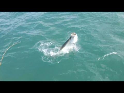 Boca Grande Tarpon Fishing Charters!